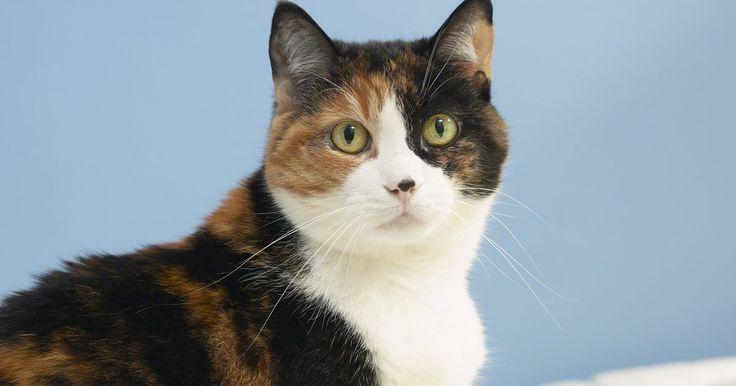 Cómo limpiar vómito de perro o gato de la alfombra. Nada sobresalta más a los dueños de mascotas cuando duermen que escuchar los jadeos de un perro o un gato cuando está a punto de vomitar. Existe una regla tácita que dice que lo tienen que hacer en la alfombra, no en el piso de la cocina, el cual es fácil de limpiar. Quitar esas manchas de vómito de la alfombra podrá necesitar un poco de atención ...
