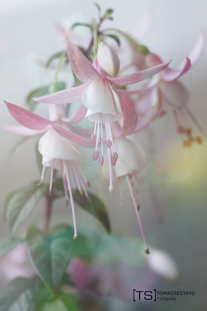 Some flowers –  More: http://www.tomas-sestayo.es/#!/page_Portfolio