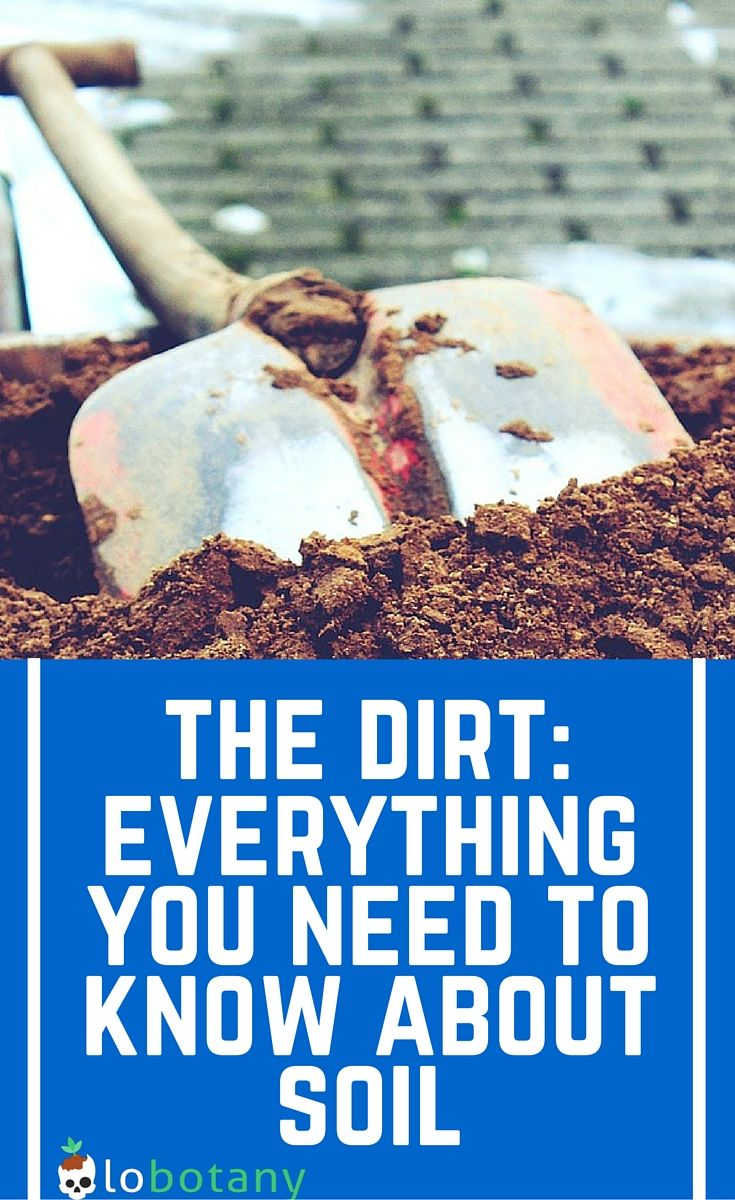 Everything You Need To Know About What Makes A Good Garden Soil And Potting  Mix.