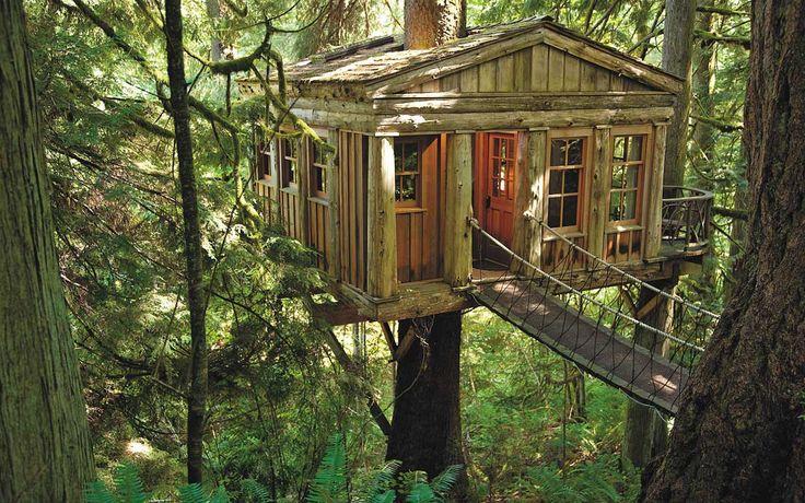 On a tous un jour rêvé de construire une cabane dans les arbres… Et bien eux, ils l'ont fait !