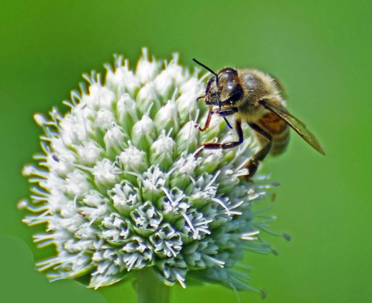 #Canada - We are Missing Bees! | Did you know Canada?