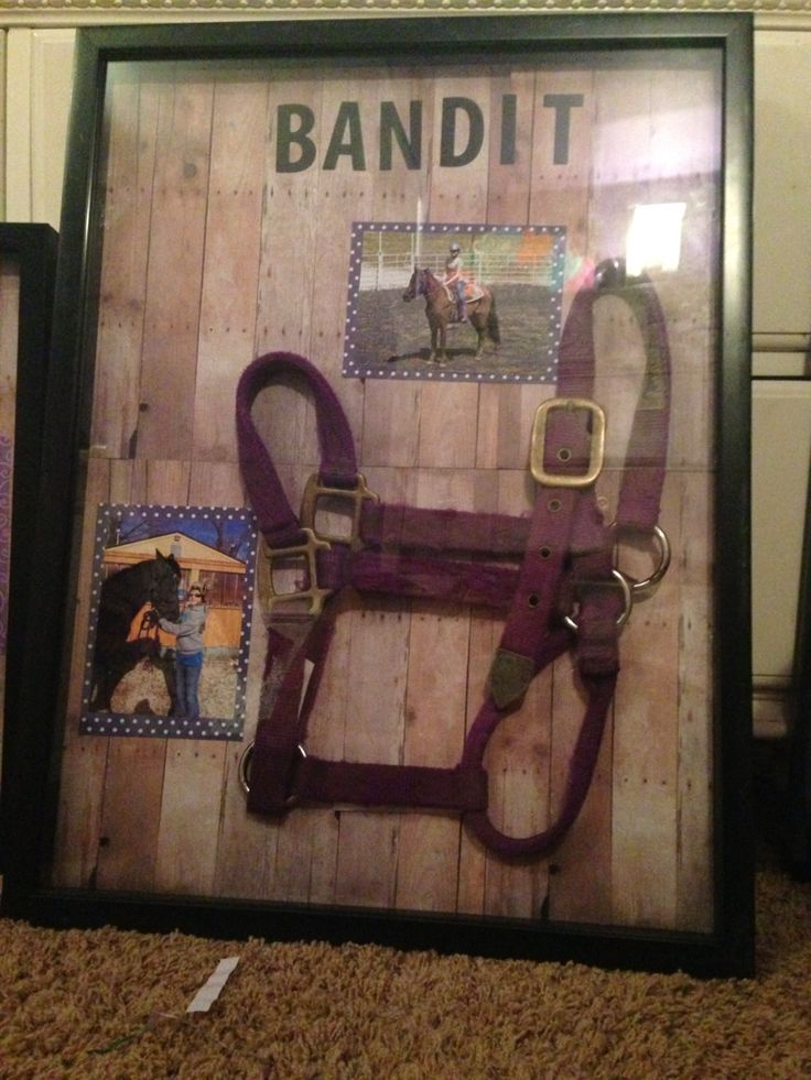 Horse halter shadow box One day, we will make one for Squire.