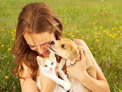 Traumdeutung: Begegnung mit Tieren im Traum Tiere repräsentieren im Traum unsere eigenen Eigenschaften und Wünsche. Im Motiv des Tiers sind unsere inneren Einstellungen verkörpert.