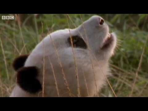 Funny Animals Talking For Sport Relief - Walk On the Wild Side - BBC Sport Relief Night 2010 http://pinterest.com/shorty8392/