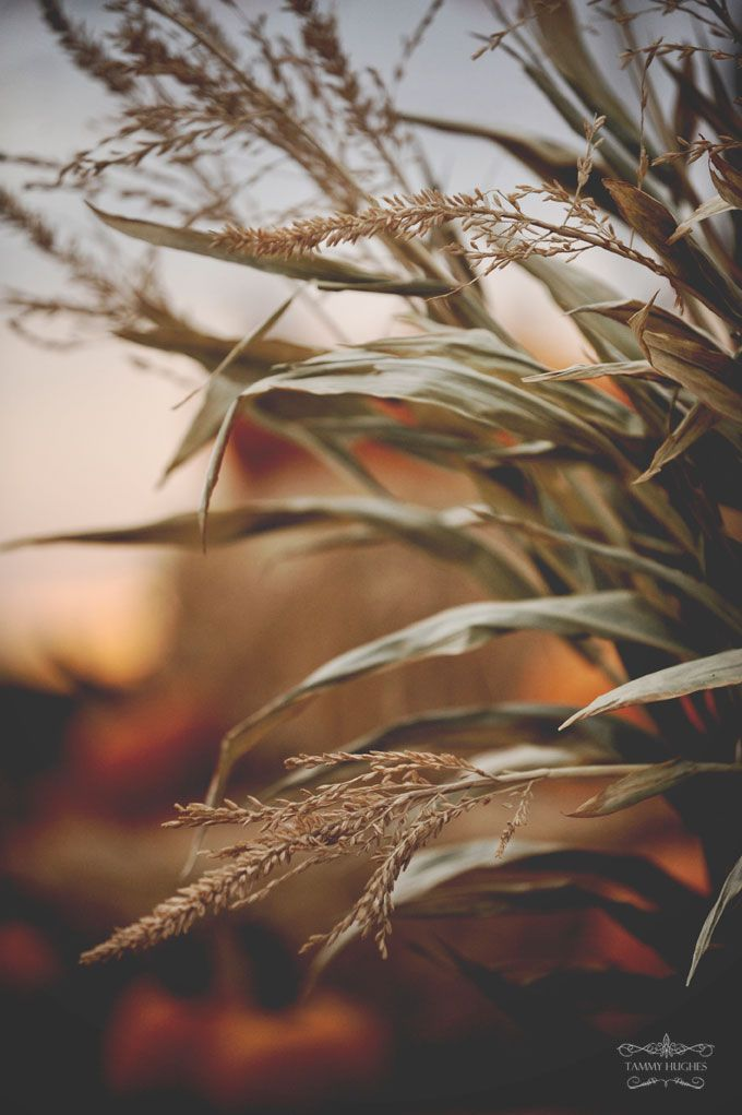 Fantastic capture of autumn. Photo by Tammy Hughes #fall | #leaves