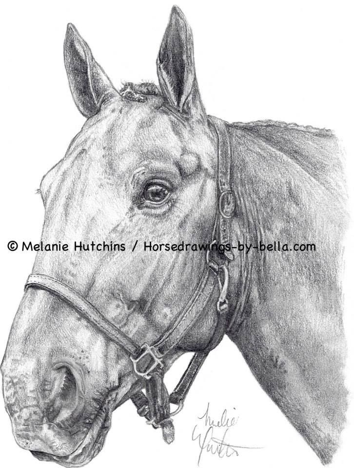 Portrait of Willy.  Copyright Melanie Hutchins / horsedrawings-by-bella  Follow me on Facebook: https://www.facebook.com/Horsedrawingsbybella.MelanieHutchins Twitter: https://twitter.com/MelHTheArtist YouTube: https://www.youtube.com/channel/UCZDEjNKuowAo92BhnMWWBzA