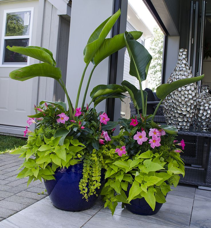25 Best Ideas About Plants Sunny On Pinterest Insect Repellent Plants Mosquito Plants And