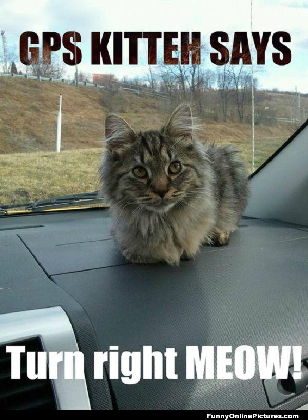 #Funny Cat #Meme #lol #funnypic