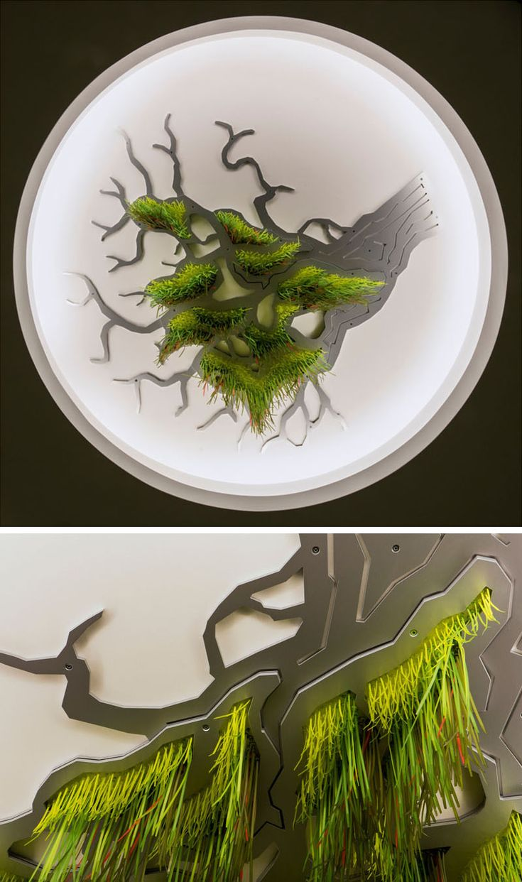 Фото из статьи: Круто смотрится в интерьере: чудо-дерево, которое растёт на потолке