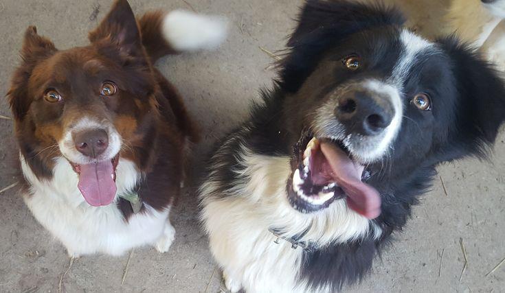 Zorro with his sister, Loki