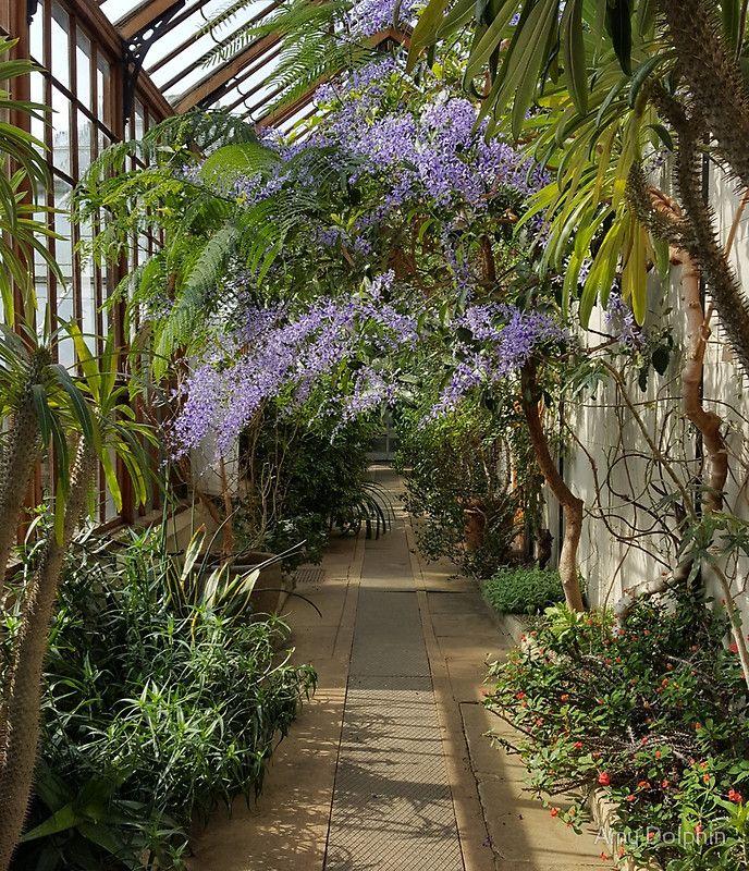 Botanical Purple