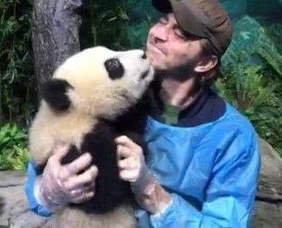Lee Pace cuddling a Panda. My life is officially complete.