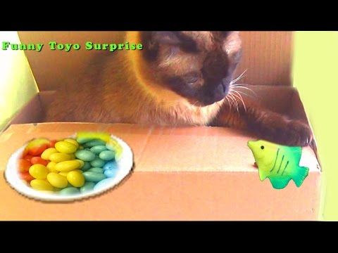 Funny Cat Real Hello Kitty Candy Gum Cat Tom and Jerry Video Kids Funny Toyo Surprise - YouTube