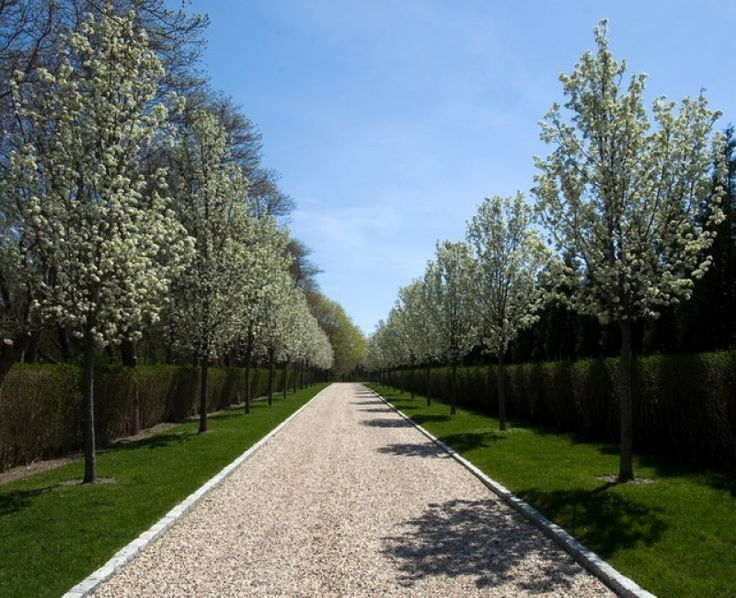 Tree Lined Driveway Home Design Ideas Pictures Remodel And Decor in Long Driveway Landscaping Ideas