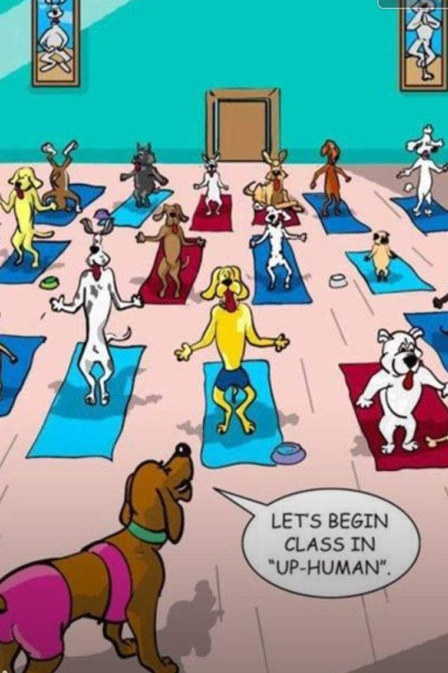 Dog yoga!   #dogyoga #funny #humor #yoga #dog #yogaeverydamnday
