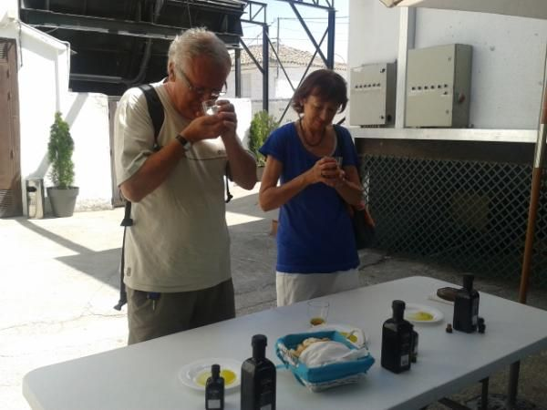 At the end of the guided tour at the mill, you will have the opportunity to enjoy a free olive oil tasting lesson!  Get immersed in olive oil world and discover all the secrets of this precious liquid!