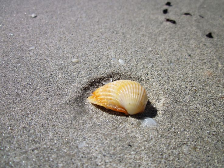Seashell, Tunisia