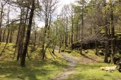 Forest covert with moss at Borrowdale