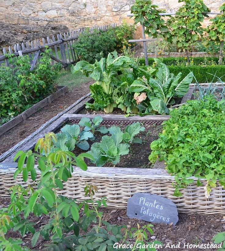 1027 Best Images About Vegetable Garden: Raised Beds On