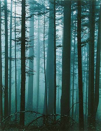 The forests of North Carolina.