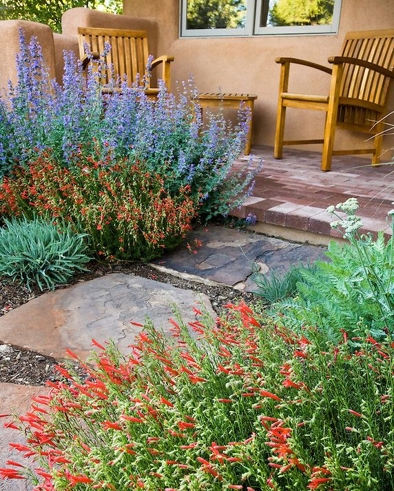 Desert Garden Ideas: 189 Best Desert Landscaping Images On Pinterest
