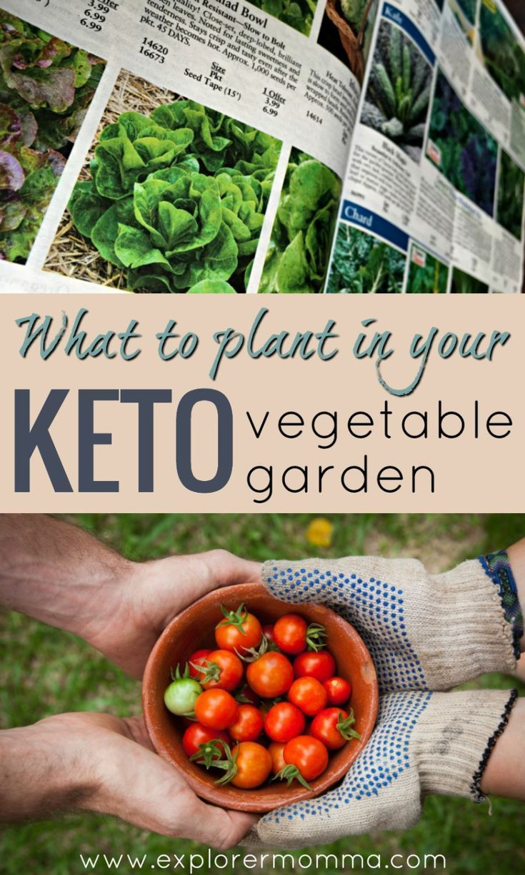 What To Plant In Your Keto Vegetable Garden Gardening For
