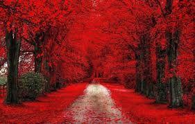 Výsledek obrázku pro abstraktní pozadí na plochu podzim