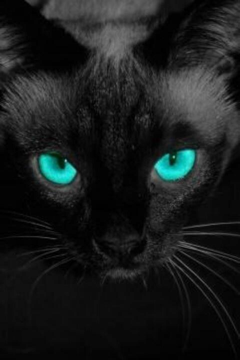 Black Cat with Amazing Blue Eyes | Beautiful Black Cats ...