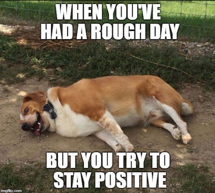 Funny Dog Memes That Will Make You Laugh 8 Dogmemes Dogsfunnyquotes Funny Dog Memes Funny Animal Pictures Dog Memes