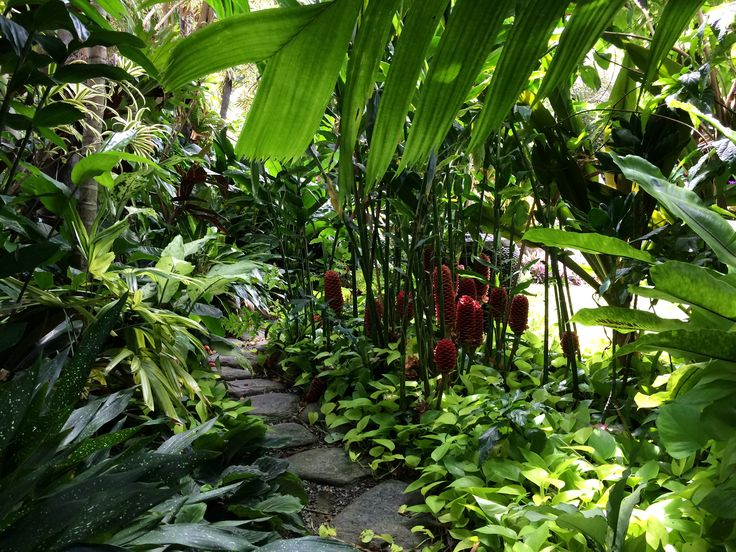 Tropical Garden Path, Beehive gingers, Aspidistra, Pothos Goldilocks, Dieffenbachia