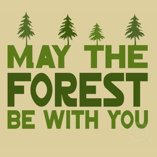 May the forest be with you. hehe. #starwars