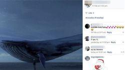 Levensgevaarlijke 'Blue Whale Challenge' waait over naar ons land: al 18 dossiers bekend. Een 'spel' op sociale media. De 'ultieme', vijftigste opdracht is om zichzelf van het leven te beroven.