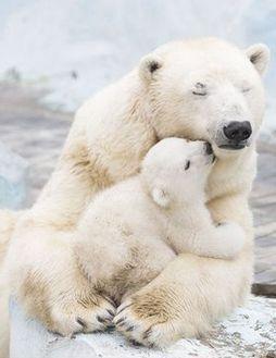 A very beary hug I #wildlife I #wildanimals via @KaufmannsPuppy