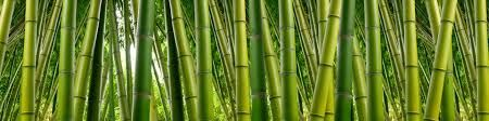 Image result for jungle bamboo photo frames