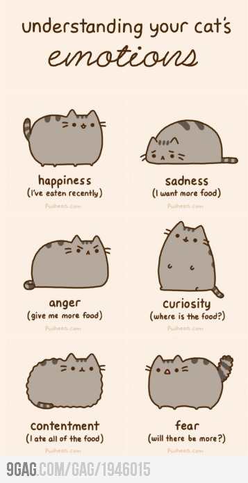 pusheemotions....basically I am a cat lmfao