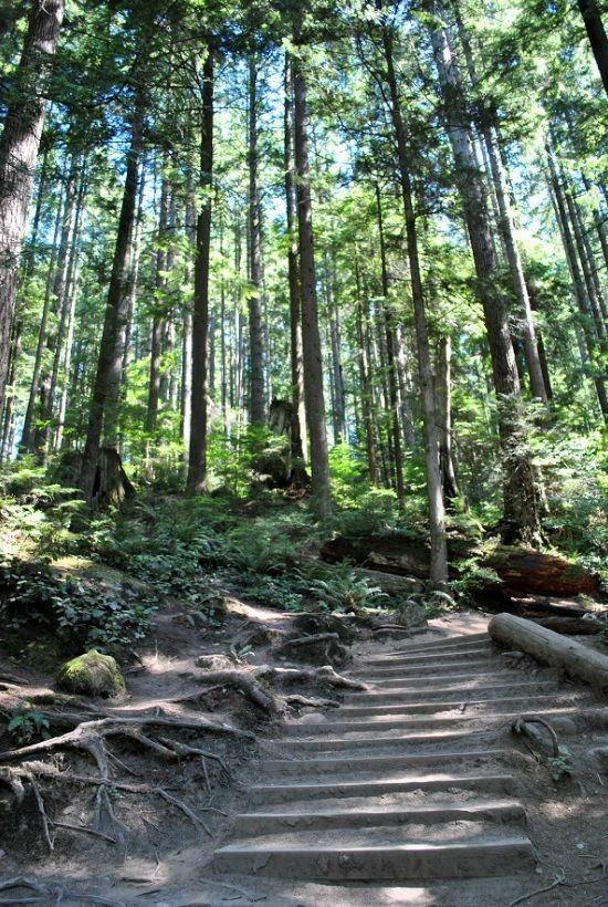 Lynn Canyon Hike | North Vancouver.