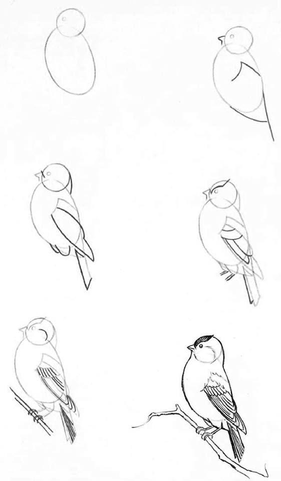 Manera de poder dibujar un ave.