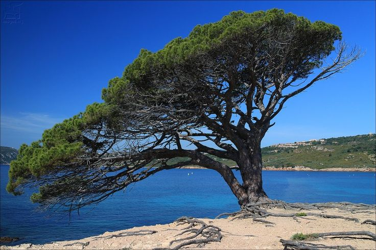 Capu d'Acciaju - Plage de Palombaggia - Corse du sud - France