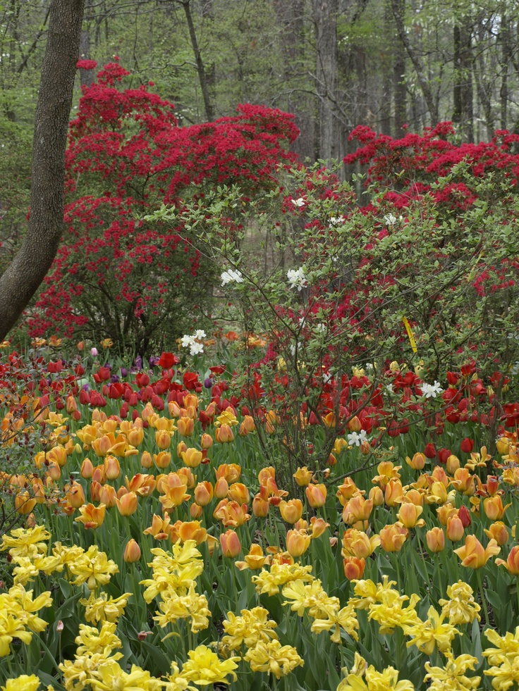 17 Best Images About Hot Springs National Park Arkansas On Pinterest Gardens Tulip And