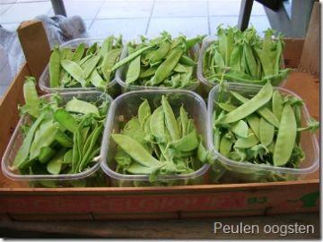 Erwten en peulen: zaaien of planten. Gemakkelijk te kweken!