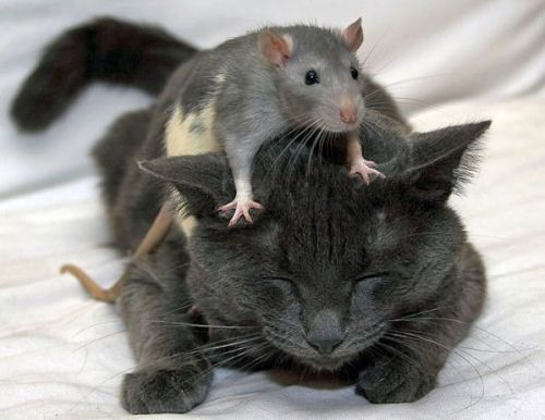 """Tom & Jerry -- """"they LOVE each other!"""" """"no they don't - what show are you watching?"""" Baby mama anyone?"""