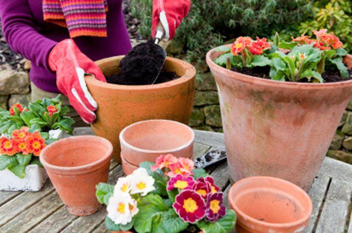 74 best jardines y terrazas images on pinterest baralhos for Macetas para jardin
