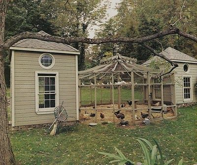 Chickens to one side, bird aviary to the other. Perfect.