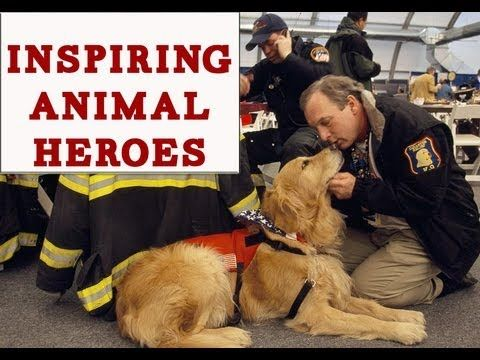 Inspiring animals heroically rescuing animals and humans (VIDEO) » DogHeirs   Where Dogs Are Family « Keywords: animals, heroes, animals rescuing animals, compilation