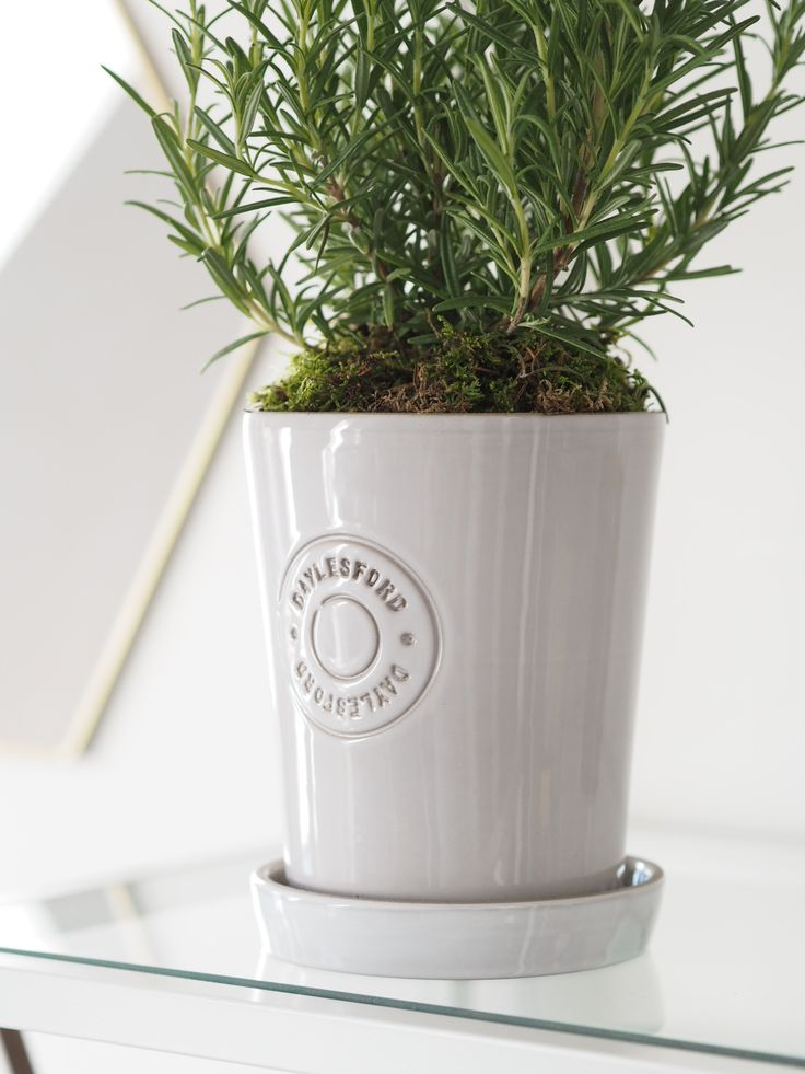 Daylesford plant pot with Rosemary