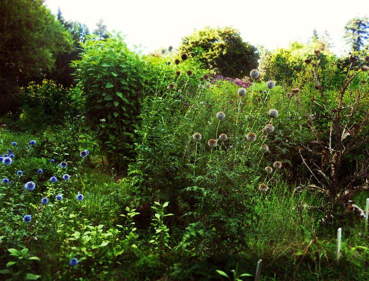 Botanical garden - Botanikus kert
