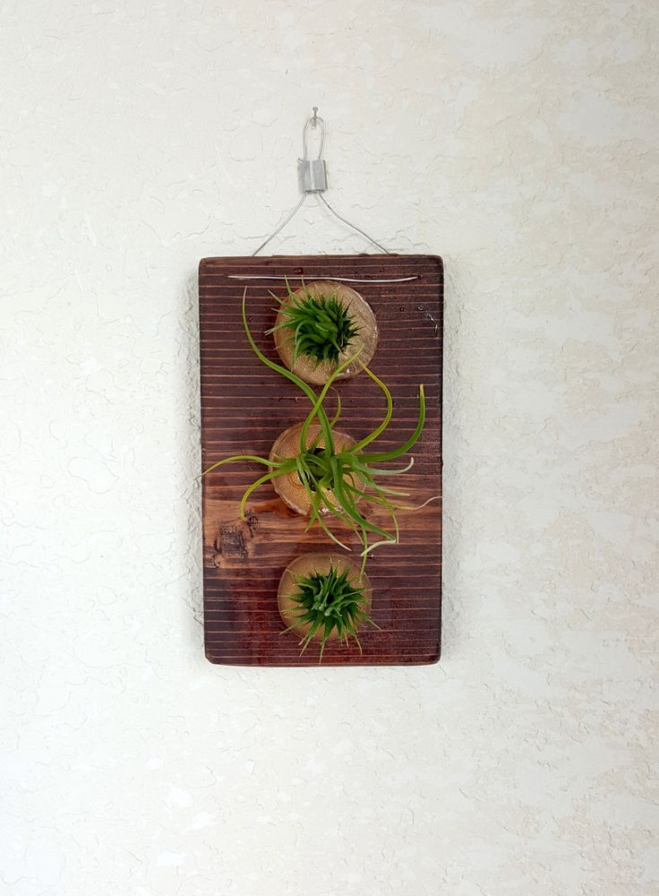 Vertical air plant wall hanging, 3 air plants mounted on reclaimed cedar wood in bamboo holders! by SucculentEnvy on Etsy