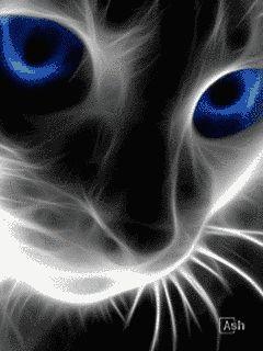 gatitos gif con movimiento para móviles o teléfonos celulares : Check this out and other cool websites HERE!