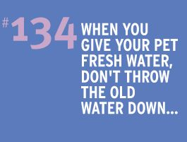 Water Conservation Tip 134: When you give your pet fresh water, don't throw the old water down the drain. Use it to water your trees or shrubs.