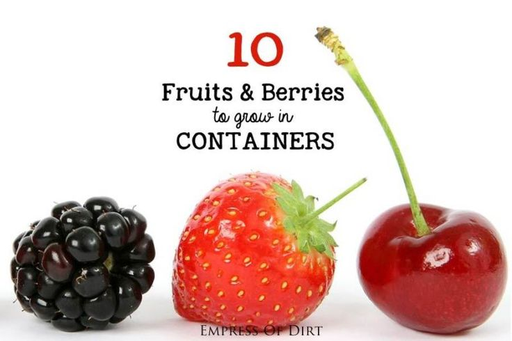 Lots of Delicious Options There are plenty of fruits and berries you can grow in containers on a patio, balcony, or porch. Many dwarf fruit trees like apple, fig, and cherry grow very nicely in containers,...